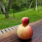 秋の徳佐へ、リンゴ狩りに行って来ました🍎