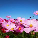 毎年恒例、花の海へ🍀