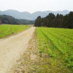 豊浦リフレッシュマラソン