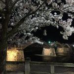 錦帯橋で夜桜