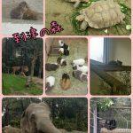 福岡県北九州市小倉北区にある「到津(いとうづ)の森公園」に行きました。